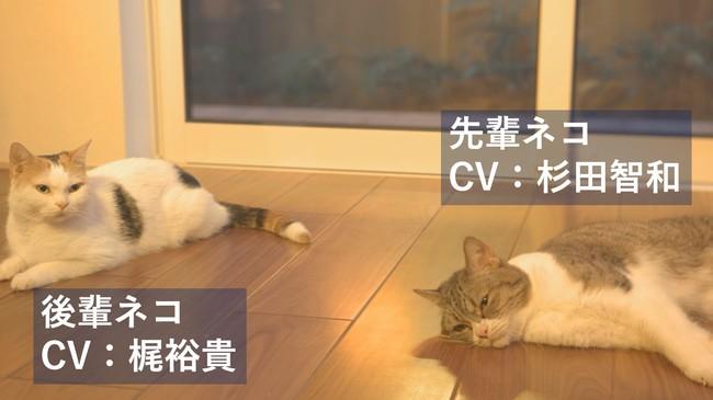 梶裕貴さんは可愛い後輩猫役、杉田智和さんはぐうたらな先輩猫役!猫にアテレコをしたパナソニックのWEBCM3篇が公開