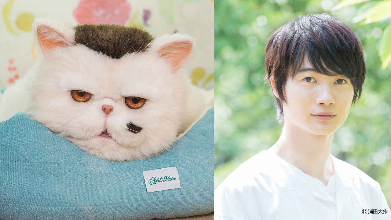 実写ドラマ「おじさまと猫」ブサ猫ふくまる役・神木隆之介さんに決定!「贅沢すぎて夢を見ているようです」