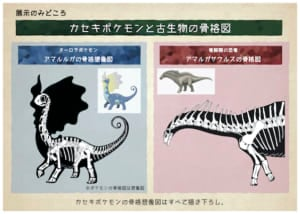 巡回展「ポケモン化石博物館」見どころ2