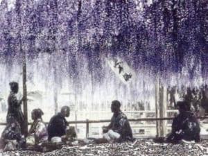 「船橋屋」イメージ