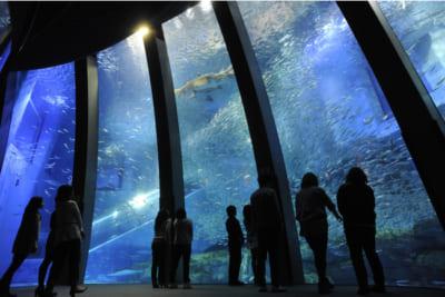 『あつまれ どうぶつの森 × 横浜・八景島シーパラダイス はっけい島 海の生きもの ふれあい展』サカナや海の幸の特別展示