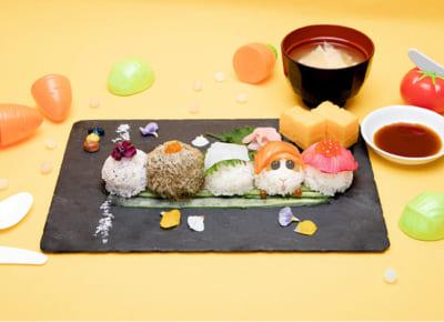 「Mogu Mogu モルカー Restaurant」渋滞はだれのせい?PUIPUI手まり寿司