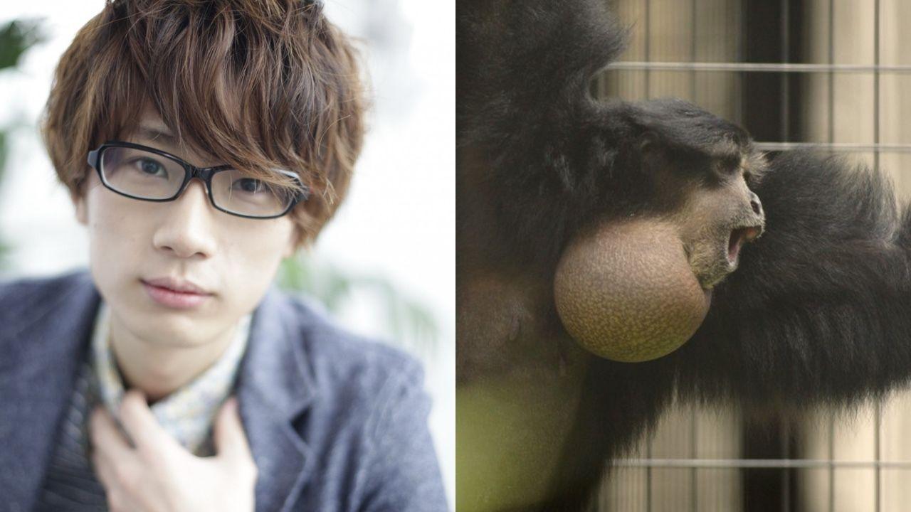 アァ〜!!母親公認の鳴き声が江口拓也さんとそっくりな猿が東山動植物園に!?いったいどんなイケボ猿?