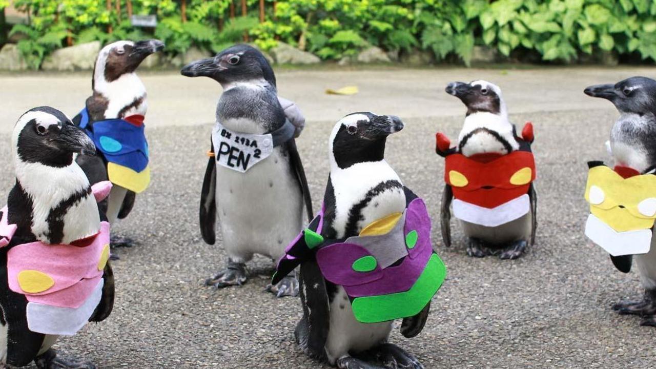 ペンペンのクオリティ高すぎ!『エヴァ』のコスプレをしたペンギンたちのお散歩ショーが開催中