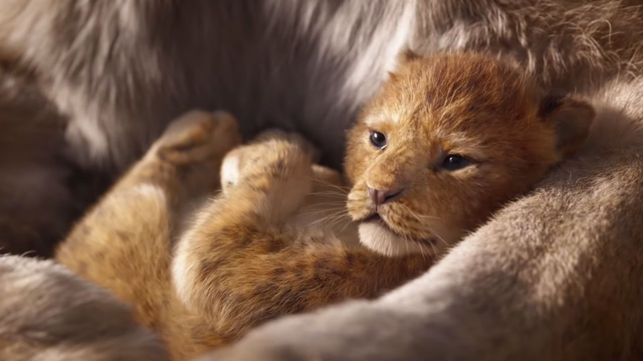 ディズニー実写映画『ライオン・キング』予告映像が公開!シンバをラフィキが天に掲げるあの名シーンも完全再現!