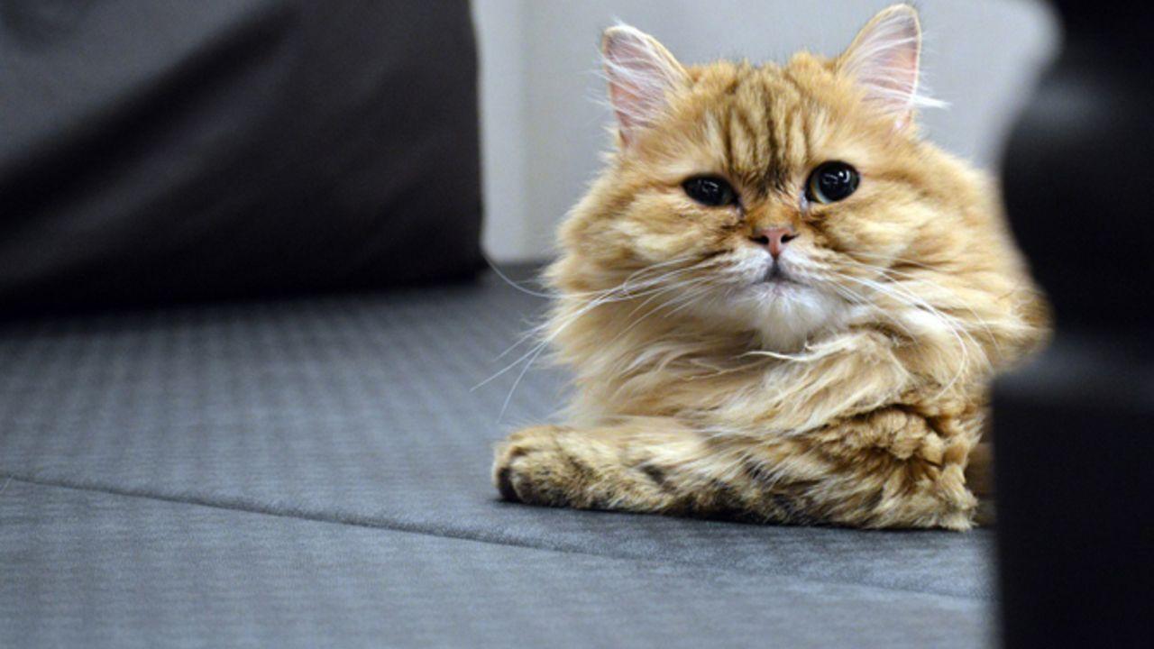猫と一緒に上映会!?『ひざうえ』猫カフェで開催の上映会レポートが到着!キャストの愛猫の写真も公開中!