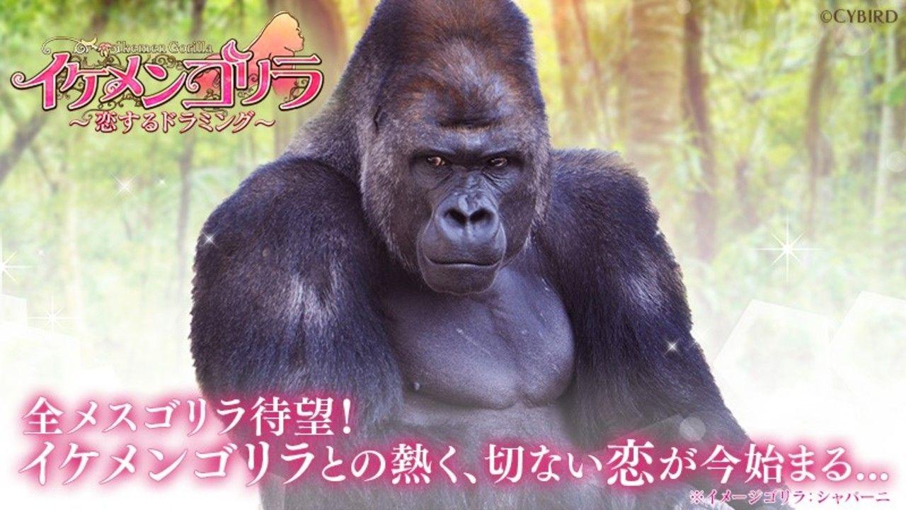イケメンシリーズ最新作『イケメンゴリラ 恋するドラミング』を発表!全メスゴリラに向けた世界初の恋愛ゲーム!