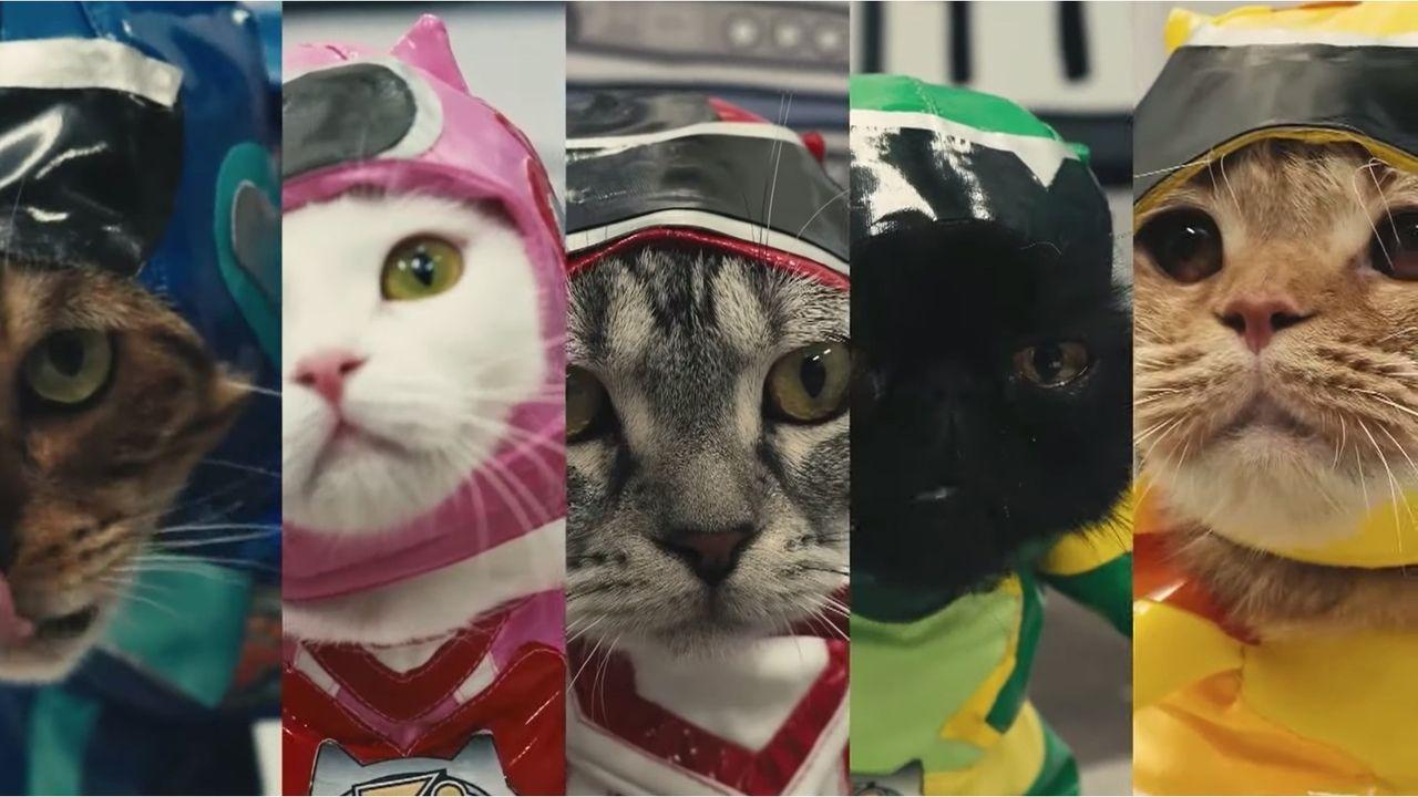 可愛すぎるヒーローに癒やされる!「声優」x「猫」の新感覚ショートムービー『ネコ戦隊 びたたま』10月11日より放送スタート